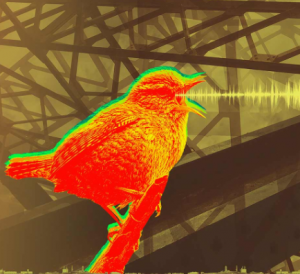 Event image - of a bird and sound wave visualisation from its beak
